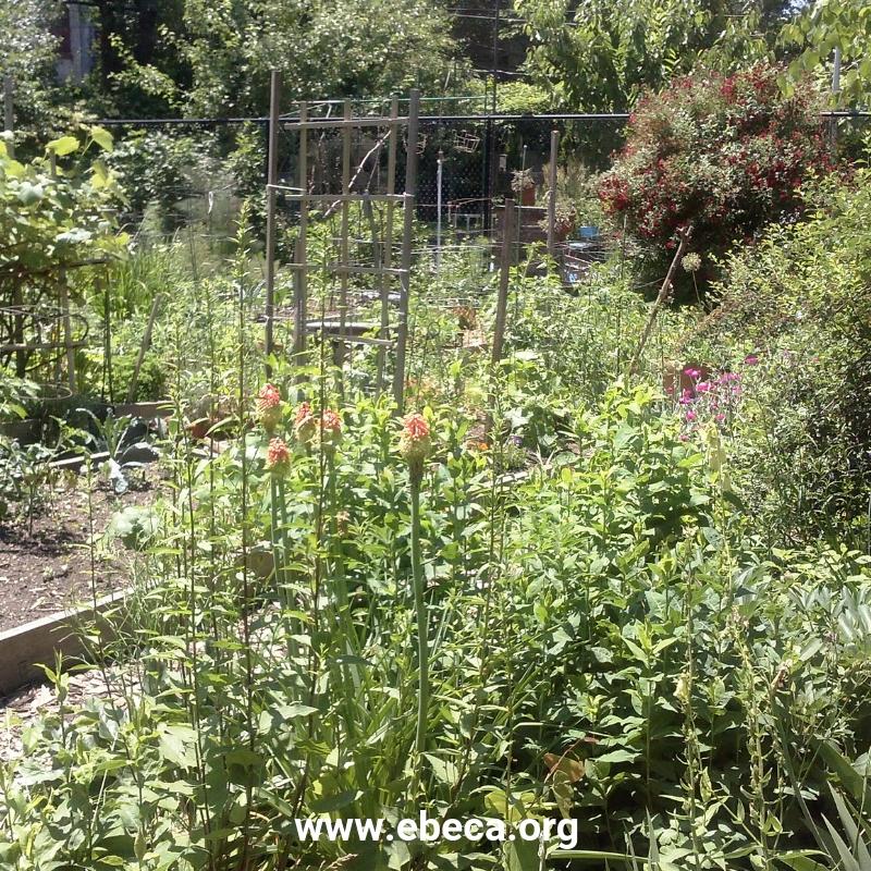 Los Community Gardens de NY