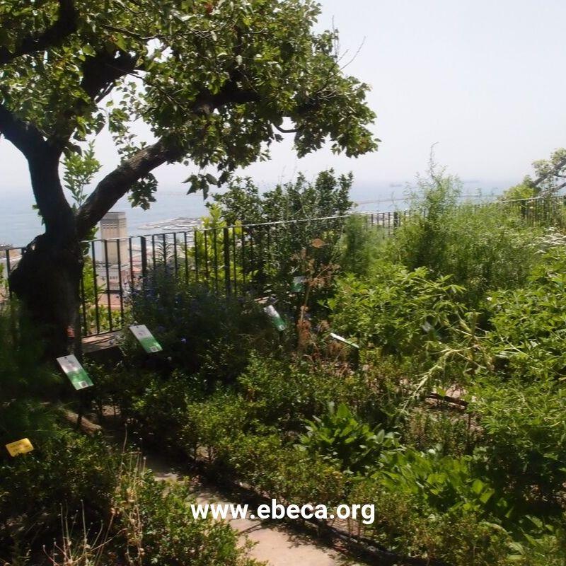Jardín de Minerva